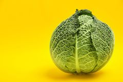 Fresh green savoy cabbage and space for text. On color background royalty free stock images