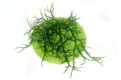 Fresh green seaweed on a green plate Stock Photos