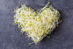 Fresh green seed sprouts. Stock Photography