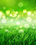 Fresh green sensation Stock Photography