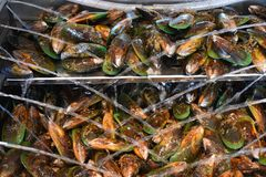 Fresh Green Shell Mussels, Havelock, New Zealand. Batch of Green Lipped mussels presented for sale in Havelock, New Zealand Stock Photography