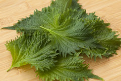 Fresh green shiso leaves Royalty Free Stock Photo