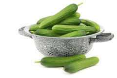 Fresh green snack cucumbers in an enamel colander Royalty Free Stock Image
