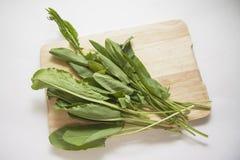 Fresh green sorrel Royalty Free Stock Photo