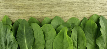 Fresh green sorrel leaves on the wooden background Stock Photography
