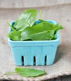 Fresh green sorrel. In to the bowl Stock Image