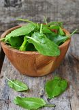 Fresh green sorrel. In to the bowl royalty free stock photos