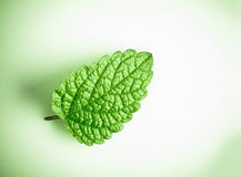Fresh green spearmint. On a white background and green vignetting corners Royalty Free Stock Photography