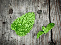 Fresh green spearmint. On a wooden plate Royalty Free Stock Images