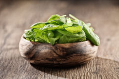 Fresh green spinach royalty free stock images