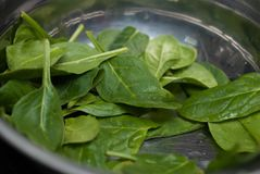 Fresh Green Spinach Leaves as Background close up. Food Ingredients. Food Recipe. Royalty Free Stock Photo