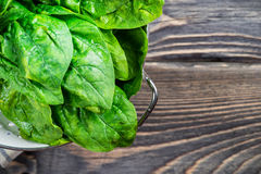 Fresh green spinach Stock Photography