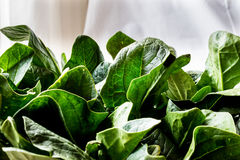 Fresh Green Spinach Leaves on white backround. Organic food Royalty Free Stock Photography