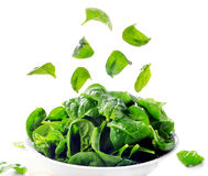 Fresh green spinach leaves Royalty Free Stock Photos