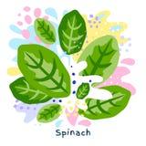 Fresh green spinach vegetable juice splash organic food on abstract coloful splatter splash background vector. Fresh green spinach vegetable juice splash organic vector illustration