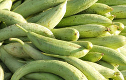 Fresh green sponge gourd. Sponge Gourd is a rampant, fast growing annual vine Royalty Free Stock Photos