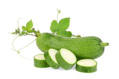 Fresh green sponge gourd or luffa with leaf isolated on white royalty free stock image