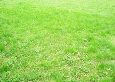 Fresh green spring grass Stock Images