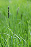Fresh green spring grass closeup as abstract nature background Stock Image