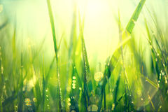 Fresh green spring grass with dew drops Stock Photos