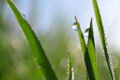 Fresh green spring grass with dew drops Royalty Free Stock Photography