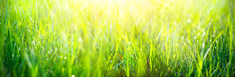 Fresh green spring grass with dew drops closeup stock images