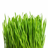 Fresh green spring grass with water drops Stock Image