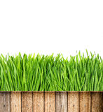 Fresh green spring grass with water drops and wooden fence Royalty Free Stock Photos
