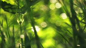 Fresh Green Spring Lawn Grass Moving on Breeze in Morning Close up, Bright Vibrant Natural Season Background stock video footage