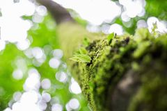 Fresh green spring leaves Royalty Free Stock Images