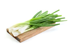Fresh green spring onions royalty free stock photo