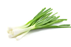Fresh green spring onions Royalty Free Stock Images