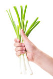 Fresh green spring onions Stock Image