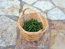 Fresh Green String Beans in Cane Basket. Freshly harvested or picked organic home grown green string beans in a round woven cane basket Stock Photography