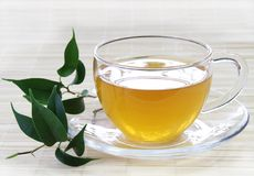 Fresh Green Tea. Cup of Fresh Green Tea with Leaves Stock Photography