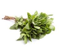 Fresh green Thai basil isolated on white background. Close up fresh green Thai basil isolated on white background Stock Photos