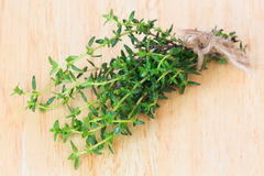 Fresh green thyme branch  Stock Image