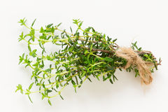 Fresh green thyme branch isolated Royalty Free Stock Images