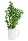 Fresh green thyme bunch in small ceramic noggin Stock Photos