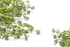 Fresh green thyme, Thymus vulgaris, in two corners isolated on a. White background, copy space Stock Photos
