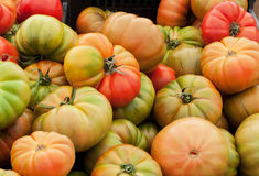 Fresh green tomatoes Stock Images