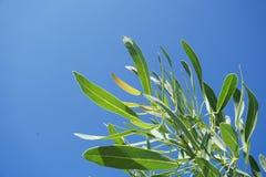 Fresh green tree on blue sky. Close up fresh green tree on blue sky Royalty Free Stock Images