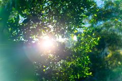 Fresh green tree foliage Royalty Free Stock Photo