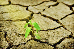 Fresh green tree growing through cracked soil Stock Photography