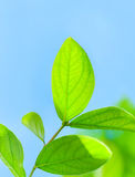 Fresh green tree leaves Stock Photos