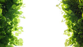 Fresh green tree leaves frame over white Stock Images