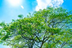 Fresh green tree over blue sky background Stock Photo