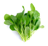 Fresh green turnip on the  white background Royalty Free Stock Images