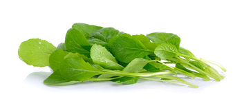 Fresh green turnip on the white background Stock Images