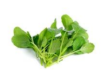 Fresh green turnip on the white background Stock Image